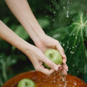 Thé pomme bio